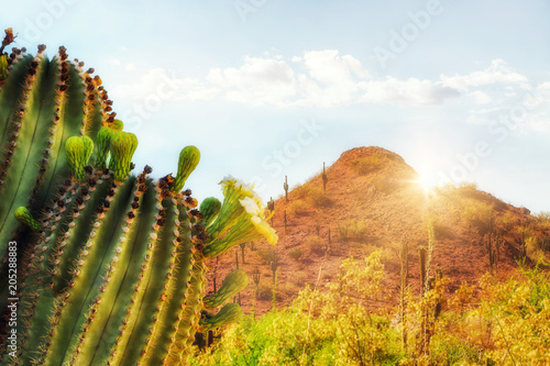 Foto auf AluDibond Lateinamerikanisches Land Arizona Desert Scene With Mountain and Cactus