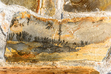 Prehistoric Plants Fossils Tex...