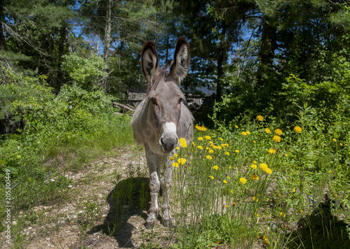 Deurstickers Ezel Donkey and Yellow Flowers