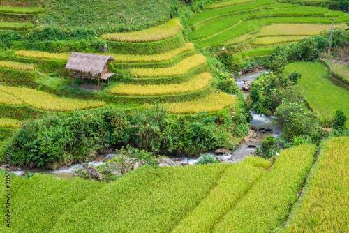 Fotografie, Obraz  Beautiful rice field terraced at Mu Cang Chai, Yen Bai, during trip HANOI to SAP
