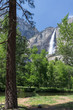 View of Lower Yosemite Falls Through the Trees