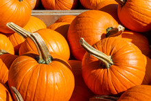 Pumpkins For Sale At Outdoor Farm Market
