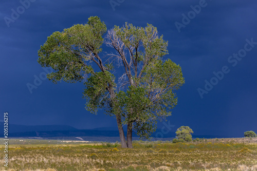 Fotografie, Obraz  Dramatic view of tree and storm clouds near Norwood Colorado near the LaSalle Mo
