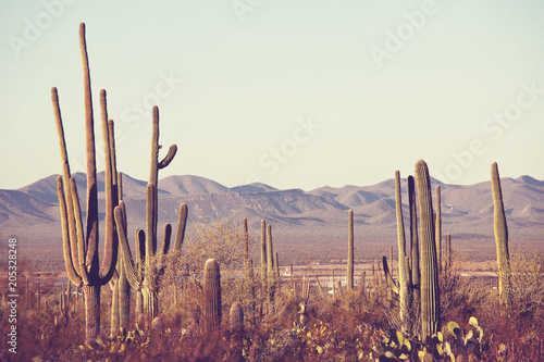 Montage in der Fensternische Kakteen Cactus