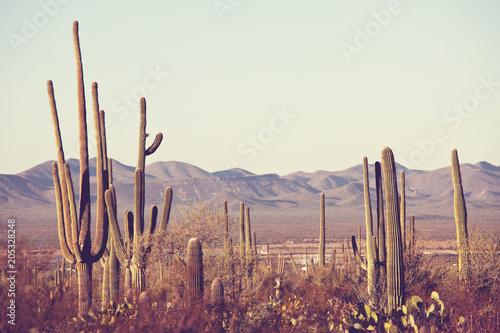 Papiers peints Cactus Cactus