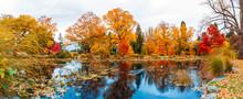 Queenstown Garden  Autumn Scenes