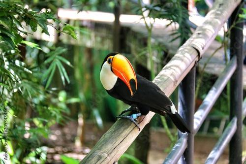 Tuinposter Toekan Iguasu bird Park