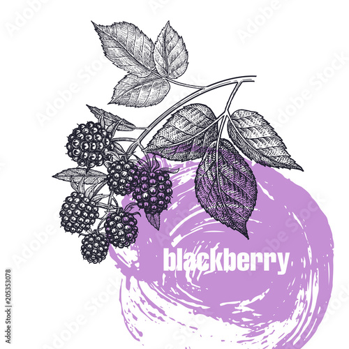 Realistic illustration of apple blackberry isolated on white background Wallpaper Mural