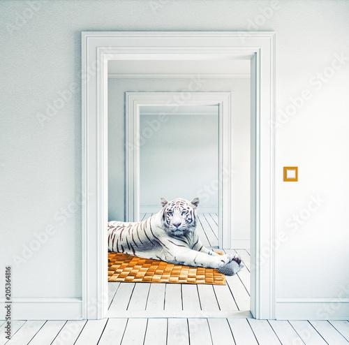 white tiger on the orange carpet