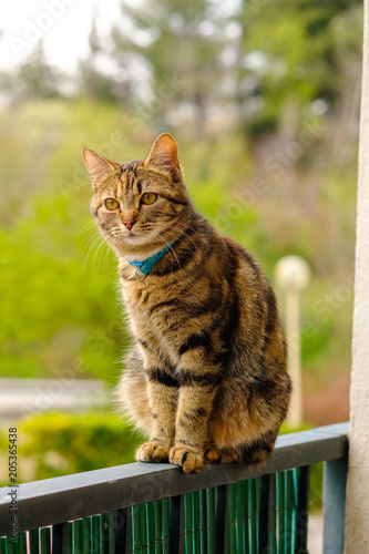 Jolie Chat Tigre Assis Sur Le Balcon Buy This Stock Photo And