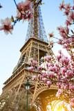 Fototapeta Fototapety z wieżą Eiffla - Blossoming magnolia against the background of the Eiffel Tower