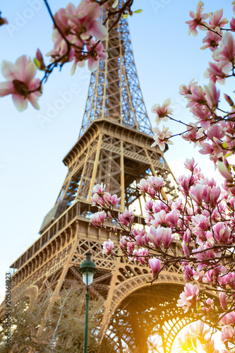Staande foto Parijs Blossoming magnolia against the background of the Eiffel Tower