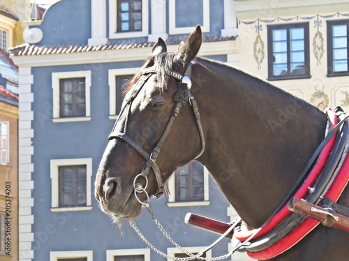 Fotomural Horse in a Carriage at Old Town Market Square, Warsaw, Poland