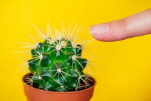 Green Cactus And Finger Pricked On The Needle On A Yellow Background