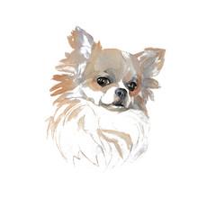 The Chihuahua Portrait