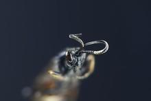 Parasitoid Wasp (ichneumonid), A Microscope Image