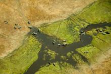 Aerial View Of Elephants (Loxodonta Africana) In The Okavango Delta In Botswana.