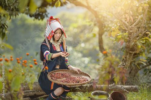 Stampa su Tela woman unidentified coffee farmer is harvesting coffee berries in the coffee farm