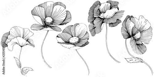 Vector poppy. Floral botanical flower. Wild spring leaf wildflower isolated. Vector wildflower for background, texture, wrapper pattern, frame or border.