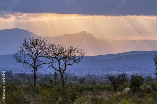 Deurstickers Afrika Cloudy sunset scenery in Kruger National park, South Africa