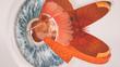 canvas print picture - Menschliches Auge im Querschnitt - sehr detailreich