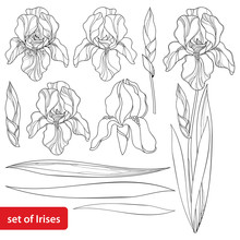 Vector Set With Outline Iris F...