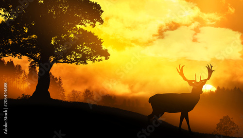 Poster Chasse Lone deer at sunset