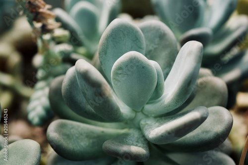 mexican typical plant summer pattern, green cactus, aloe, succulent Poster