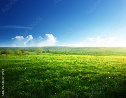 Foto op Plexiglas Weide, Moeras spring sunset and field of grass