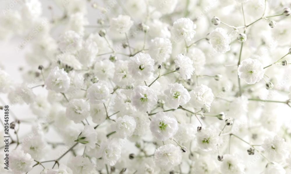 Fototapeta Floral beautiful light background. Small white flowers. Flowers Gypsophila.