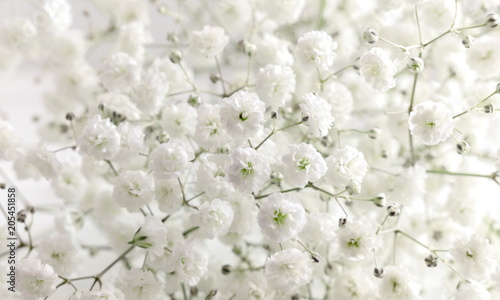 Obraz Floral beautiful light background. Small white flowers. Flowers Gypsophila. - fototapety do salonu