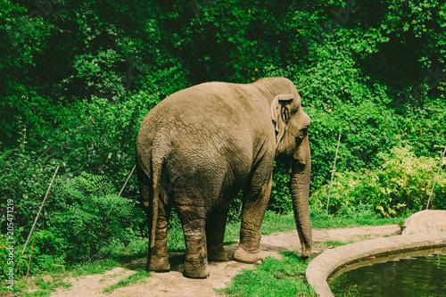 Wild Elephant Poster