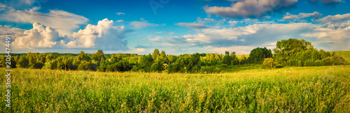 Rural landscape. Panorama