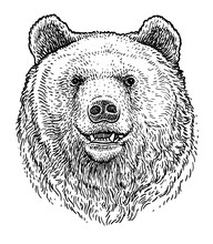 Bear Head Illustration, Drawin...