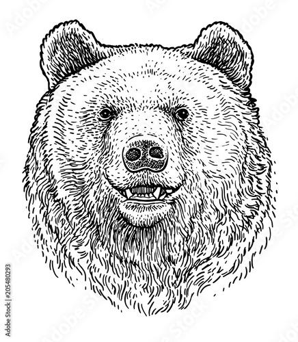 Fototapeta premium Niedźwiedzia głowa ilustracja, rysunek, grawerowanie, atrament, grafika liniowa, wektor