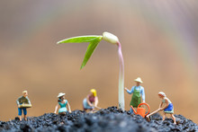 Miniature People , Gardeners Take Care Growing Sprout In Field