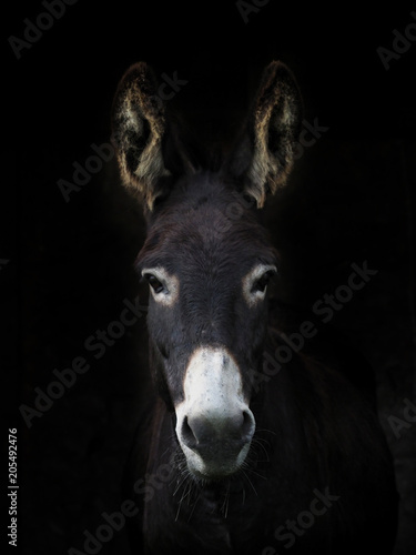 In de dag Ezel Donkey Headshot