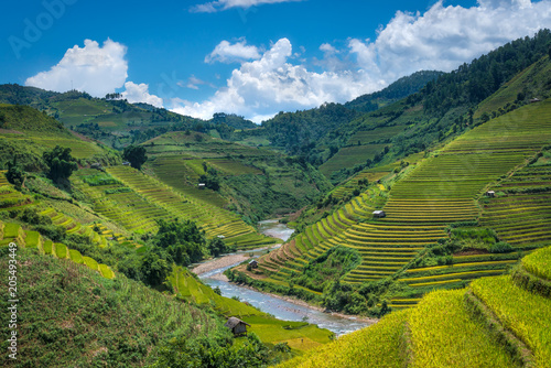 Fotografie, Obraz  Beautiful rice field terraced at Mu Cang Chai, Yen Bai, during trip HANOI to SAP