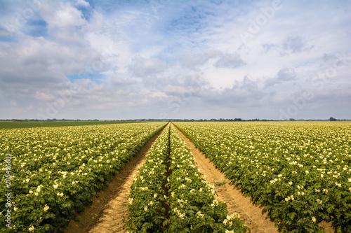 Deurstickers Platteland Potatoe field