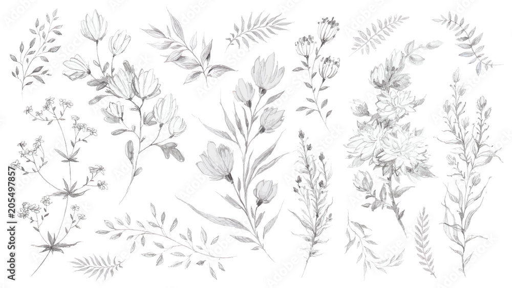 Fototapety, obrazy: Wild flowers and herbs pencil sketch