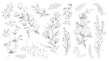 Wild Flowers And Herbs Pencil Sketch