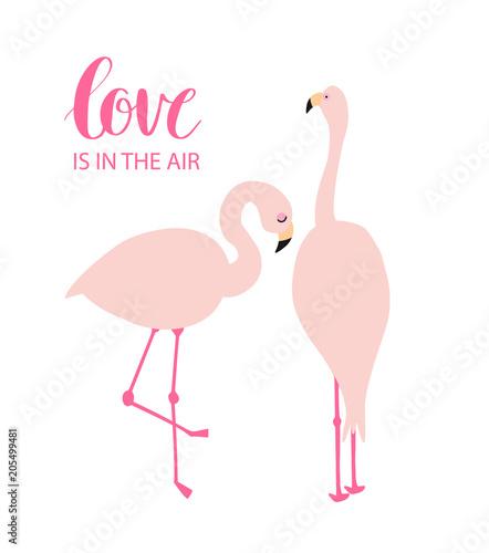 dwa-rozowe-flamingi-w-milosci