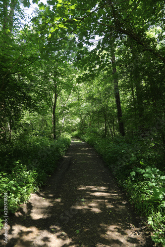 Tuinposter Weg in bos chemin