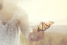 A Butterfly Leans On A Hand Of...