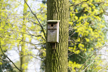 Bird Feeder Hung On A Tree Among The High Leaves.
