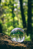 Glass sphere with forest reflection in it, standing on a tree