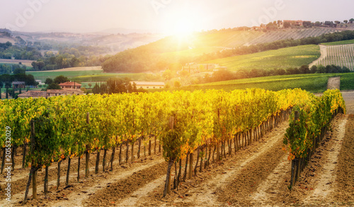 La pose en embrasure Vignoble Vineyard landscape in Tuscany, Italy.