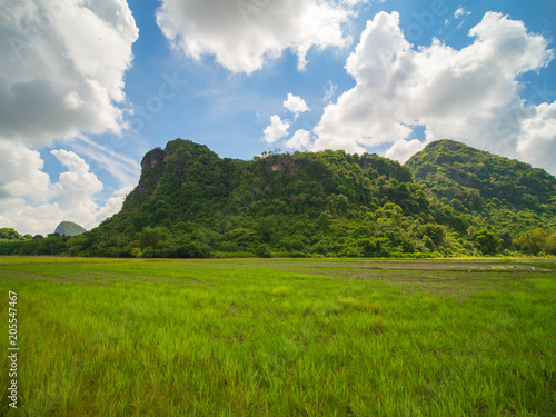Mountains and rice fields