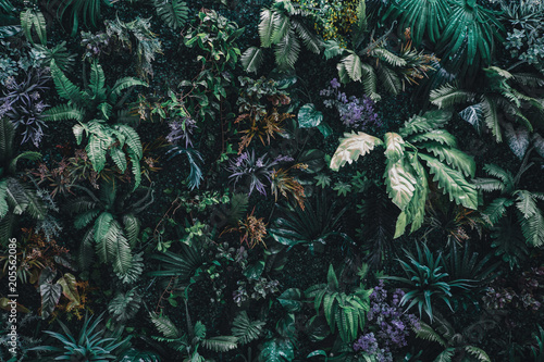 Cadres-photo bureau Fleur Beautiful nature background of vertical garden with tropical green leaf