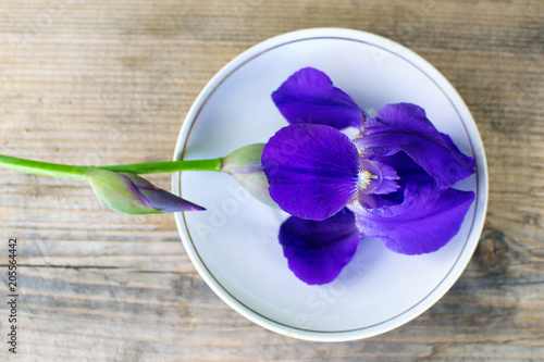 Foto op Canvas Iris Dark purple iris flowers isolated on white background